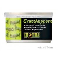 Exo Terra GRASSHOPPERS