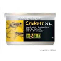 Exo Terra CRICKETS XL