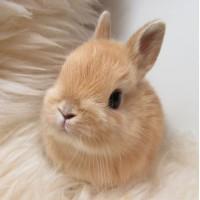 Мини заек